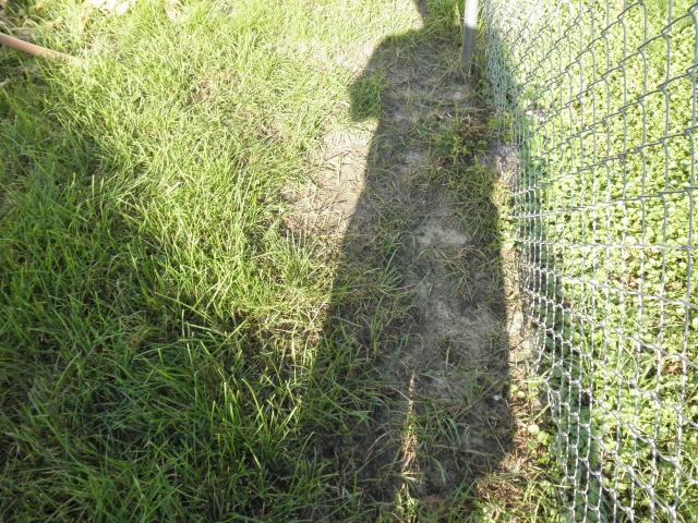 Cc Test Yard After Treatment Fj Lawn Care