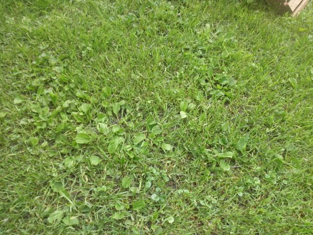 Weed Control Minneapolis Crystal Wayzata